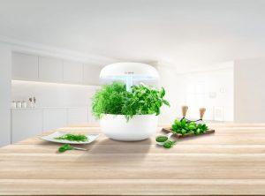 Mit dem Zubehör VarioTray eignet sich das Bosch SmartGroß auch für die Aufzucht von Superfoods wie Blattradeschen, Pak Choi oder Brokoli.