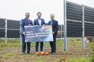 Robert Weber, Bürgermeister von Guntramsdorf, Wien Energie-Geschäftsführer Karl Gruber und Josef Taucher, Klubvorsitzender SPÖ Wien (v.l.n.r.), bei der Präsentation der ersten Agrar-Photovoltaikanlage Österreichs.